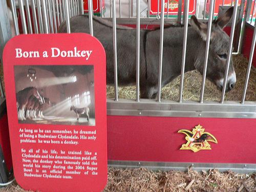 Budweiser Donkey PDKXE8JE3NXT